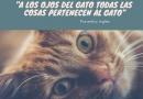 Postales y Frases de gatos