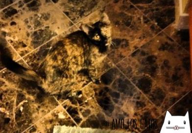 ¿Dónde esta el gato? 10 gatos expertos en el camuflaje, no los puedes dejar de ver…