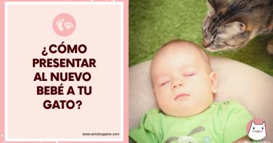 ¿Cómo presentar al nuevo bebé a tu gato_ (3)