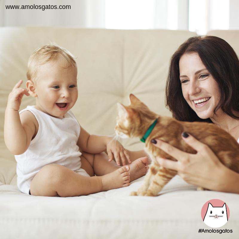 ¿Cómo presentar al nuevo bebé a tu gato_