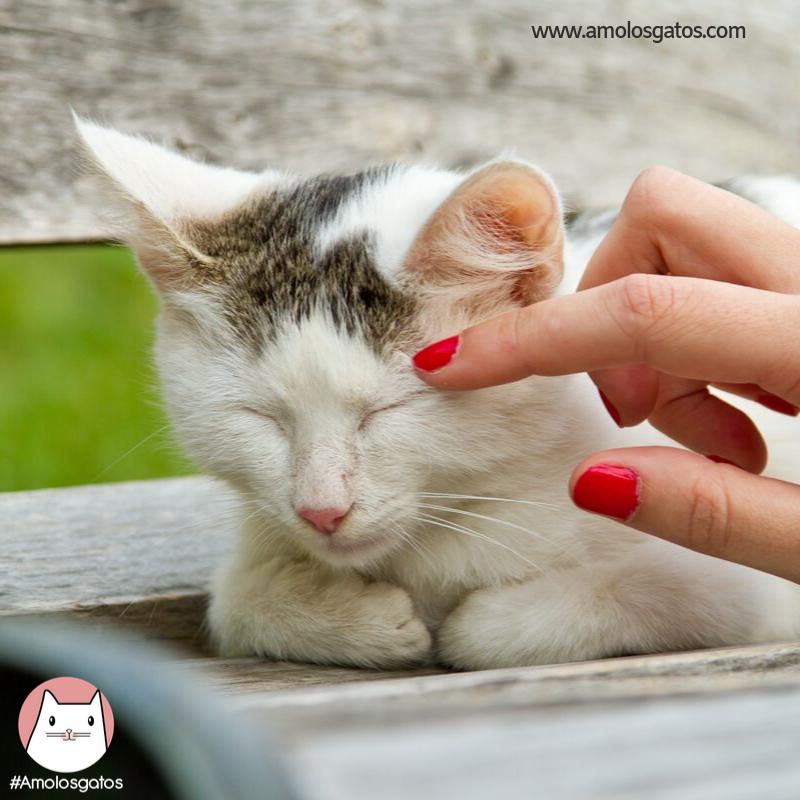 ¿Como-saber-si-a-mi-gato-le-duele-algo_-2