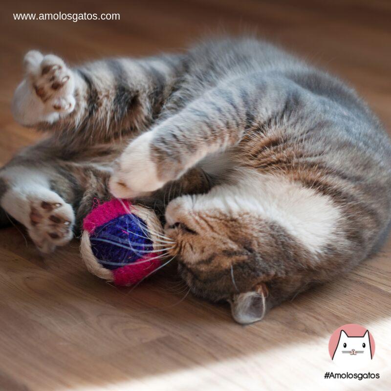 5 Razones del por qué debemos jugar con nuestro gato - Amo los Gatos