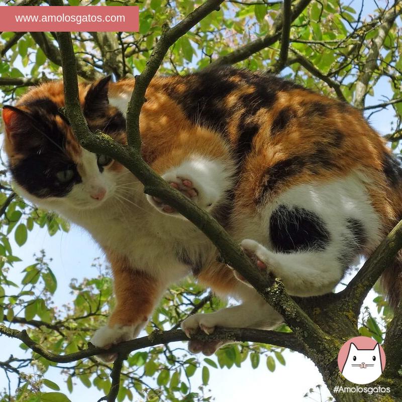 ¿Por-qué-los-gatos-aman-las-alturas_-1