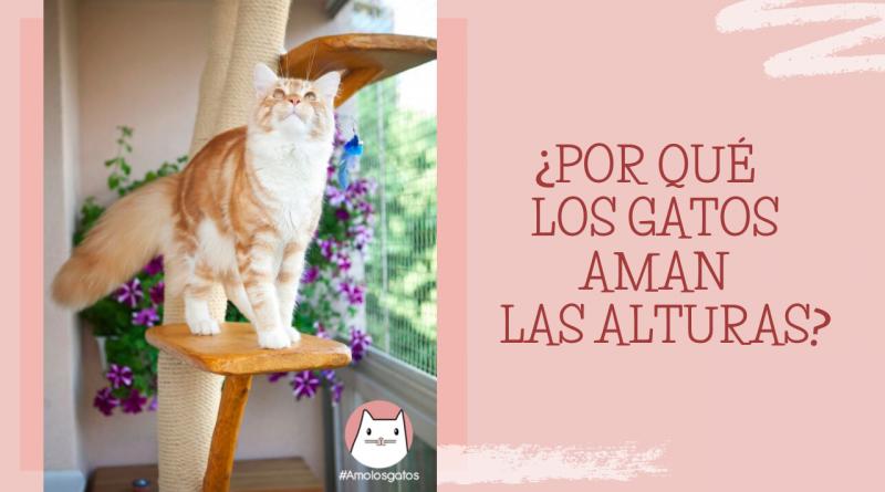 ¿Por qué los gatos aman las alturas_