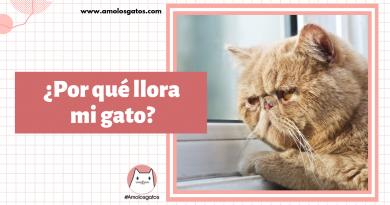 ¿Por qué mi gato llora