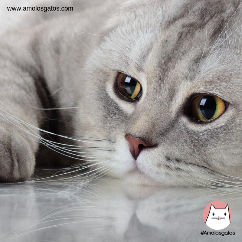 ¿Pueden-los-gatos-llegar-a-sentir-celos_-1