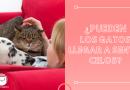 ¿Pueden los gatos llegar a sentir celos_ (3)