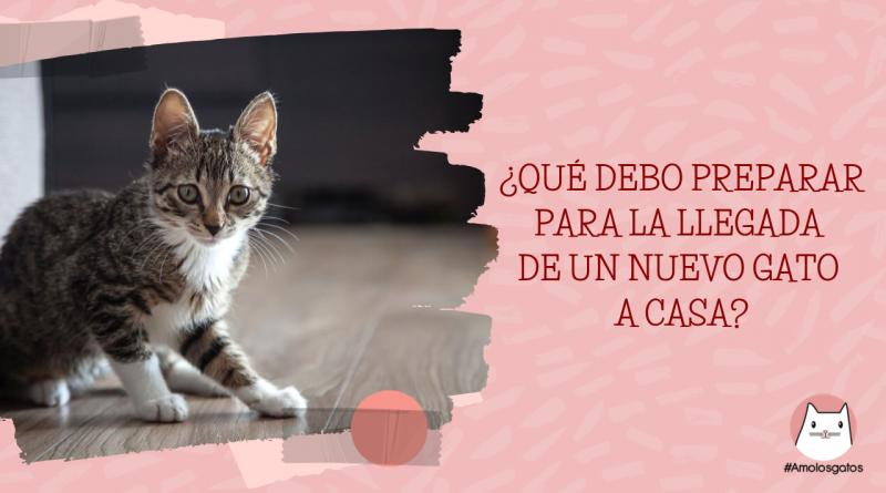 ¿Qué debo preparar para la llegada de un nuevo gato en casa_