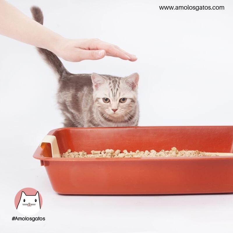 3 Tips para escoger el arenero adecuado para tu gato (2)