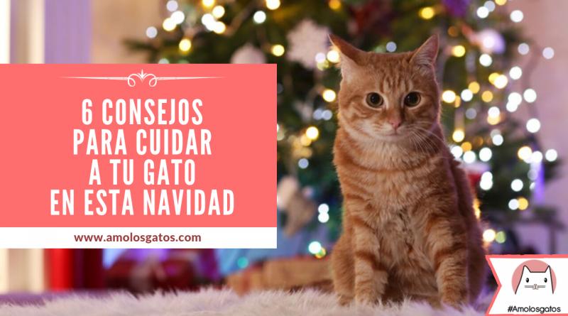 6 consejos para cuidar a tu gato en esta Navidad (3)