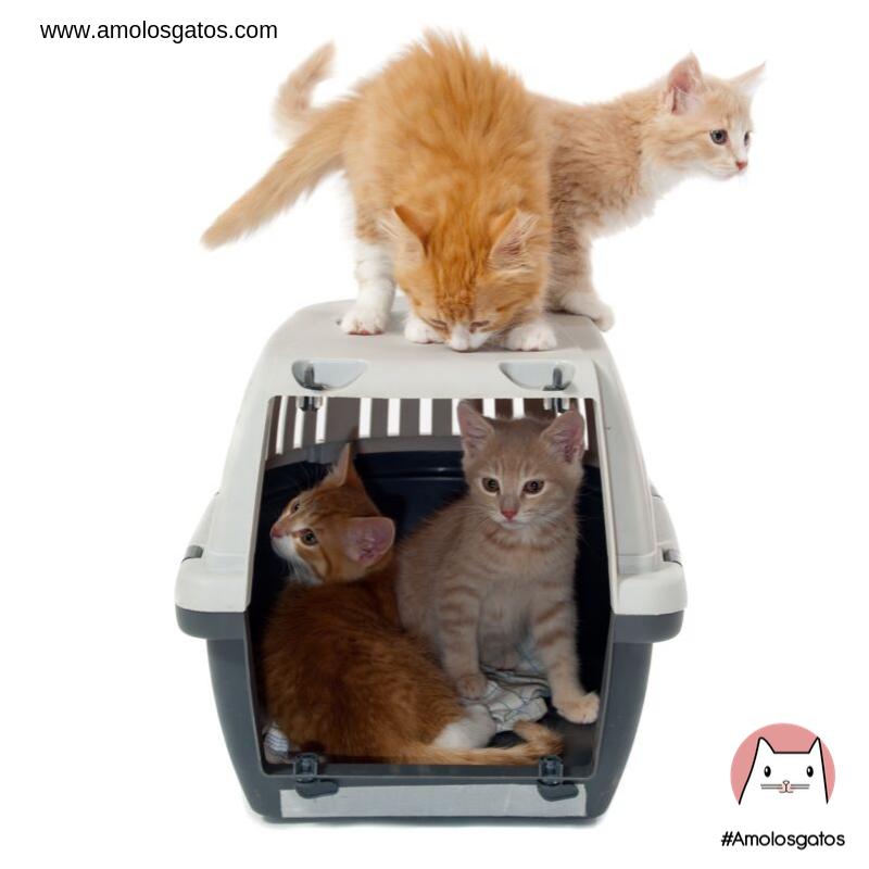 Consejos-para-que-tu-gato-entre-a-su-transportadora-1
