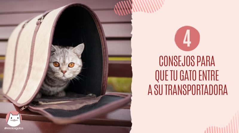 Consejos para que tu gato entre a su transportadora