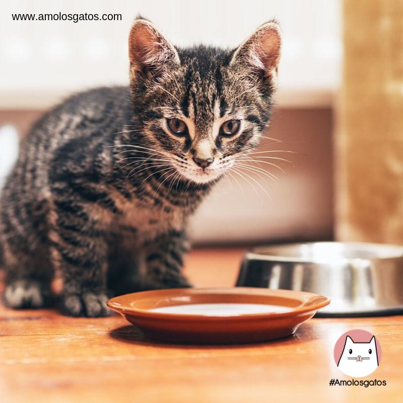formas-de-detectar-la-depresión-en-los-gatos-1