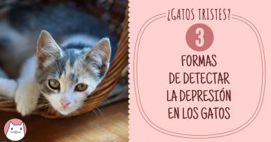 formas de detectar la depresión en los gatos (2)