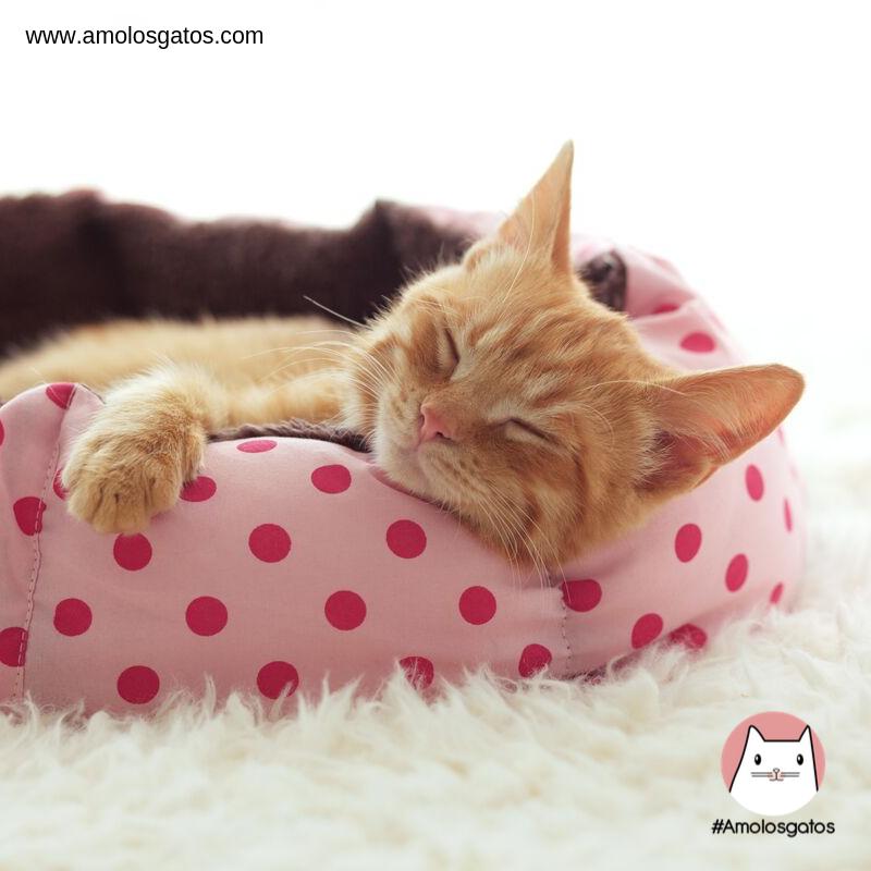 formas-de-detectar-la-depresión-en-los-gatos