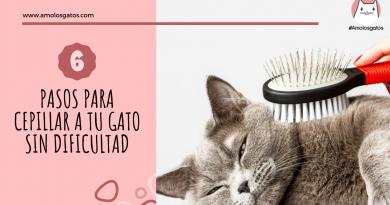 pasos para cepillar a tu gato sin dificultad (2)