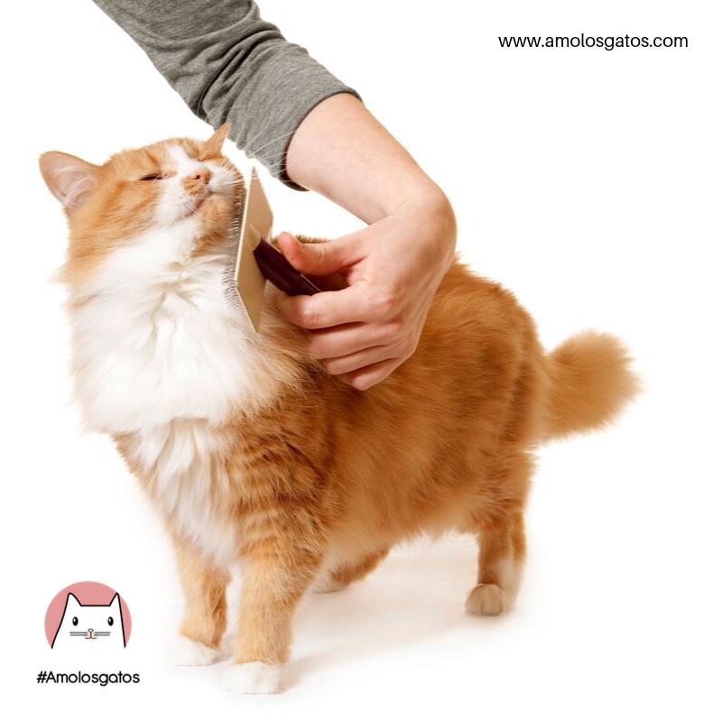 pasos-para-cepillar-a-tu-gato-sin-dificultad