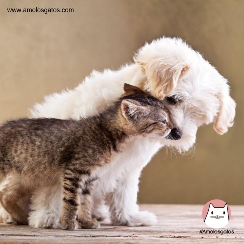 tips-para-que-perros-y-gatos-puedan-ser-amigos-2