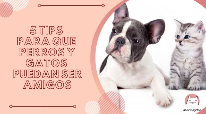 tips para que perros y gatos puedan ser amigos