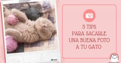 5 Tips para sacarle una buena foto a tu gato (2)