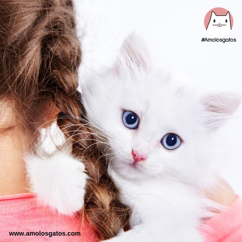 Cuidados del gatito recién nacido