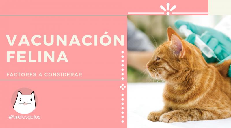 la vacuación en gatos, factores a considerar