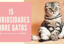 15 curiosidades sobre gatos