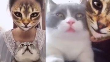Tiktok la nueva app que esta volviendo locos a los gatos, mira sus reacciones