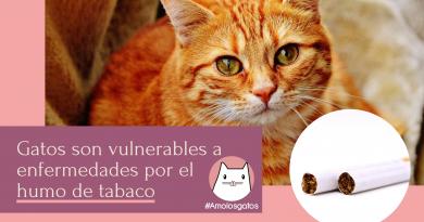 el peligro del tabaco en gatos