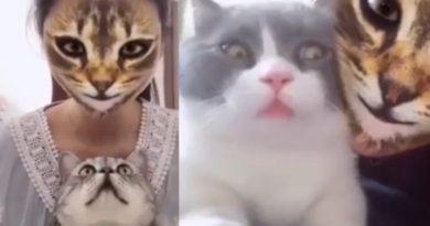 El nuevo filtro de TikTok que vuelve locos a los gatos