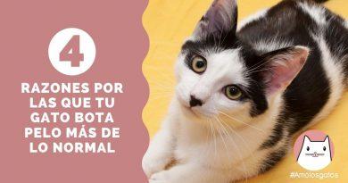 4 Razones por las que tu gato bota pelo más de lo normal