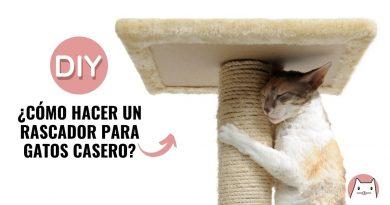 rascador-para-gatos-casero