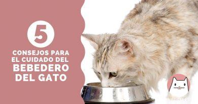 5 consejos para el cuidado del bebedero del gato