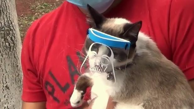 Crean caretas anti Covid-19 para gatos en xelapa mexico