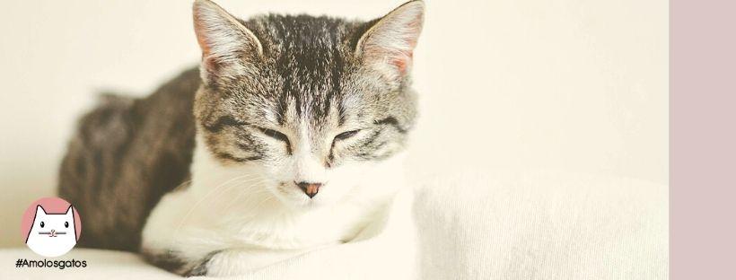guiñar los ojos a tu gato