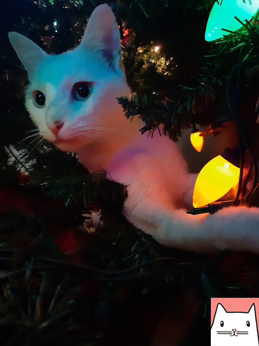 Navidad Gatos - amo los gatos