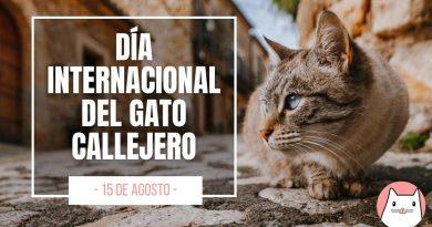 15 de Agosto día internacional del gato callejero