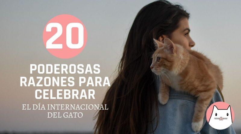 20 poderosas razones para celebrar juntos el día internacional del gato (2)