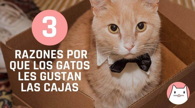 3 Razones por que los gatos les gustan las cajas