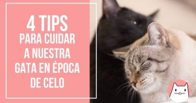4 Tips para cuidar a nuestra gata en época de celo (2)