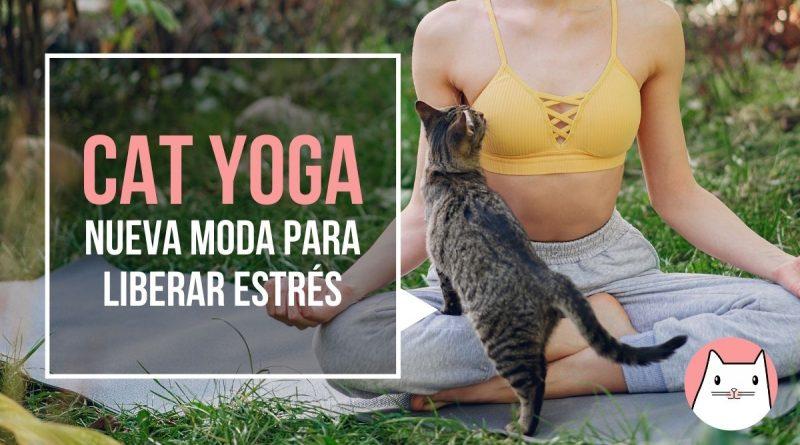 Cat-yoga, una nueva moda para liberar el estrés (3)