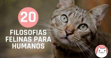 Filosofias felinas