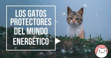 Los gatos protectores del mundo energético